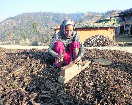'Massive destruction of herbs, wildlife in Jajarkot'