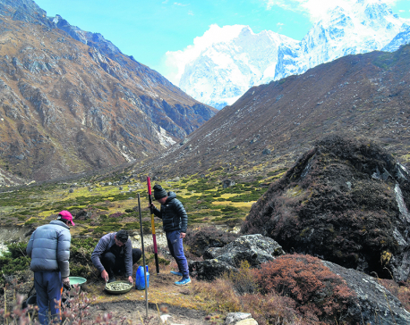 Snow poles installed to guide trekkers in Kangchenjunga base camp route