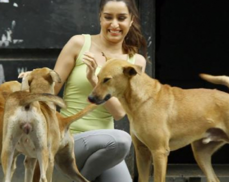 Shraddha Kapoor donates to help feed stray animals during lockdown