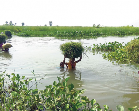Monsoon to become more active from Sunday, risk of floods likely