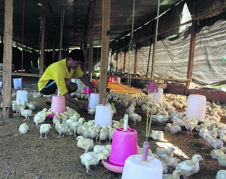 Gorkha youths find poultry farming better than foreign jobs