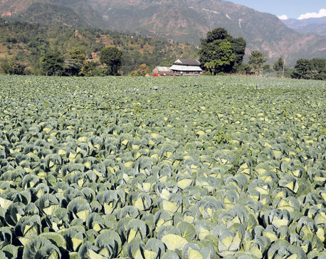 Low production makes vegetables dearer in Dhading