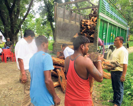 Nexus between officials, smugglers abetting deforestation