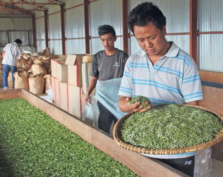 High demand for Nepali tea in Europe