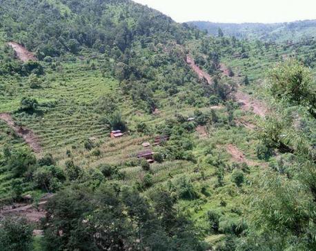 Scores displaced by landslides in Nishikhola rural municipality