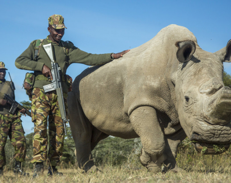 World's last male northern white rhino, Sudan, dies