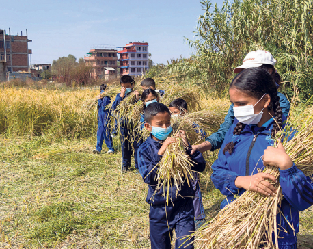 Students learn farming