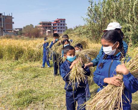 Students learn farming