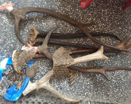 Two arrested with pangolin scales, deer horns
