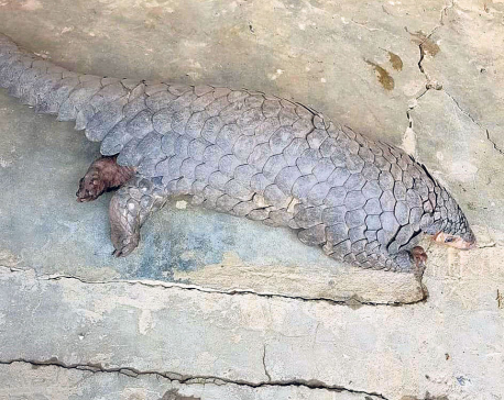 Save the pangolins