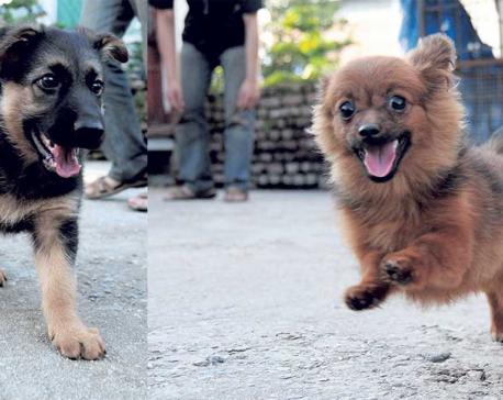 More valley denizens buying pedigree dogs