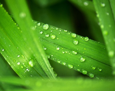 Plants less thirsty as climate warms: Study