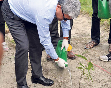 Planting trees to celebrate anniversary