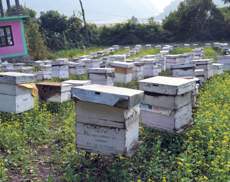 Beekeeping provides new livelihood to double amputee