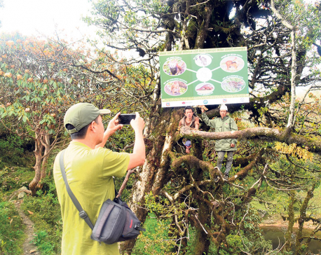 Local units make efforts for red panda conservation