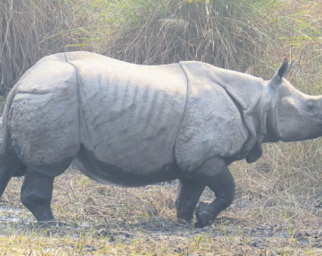 Child killed in rhino attack, one injured