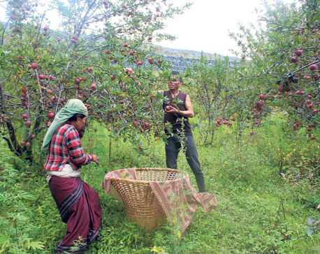 Road obstruction leaves apple farmers high and dry