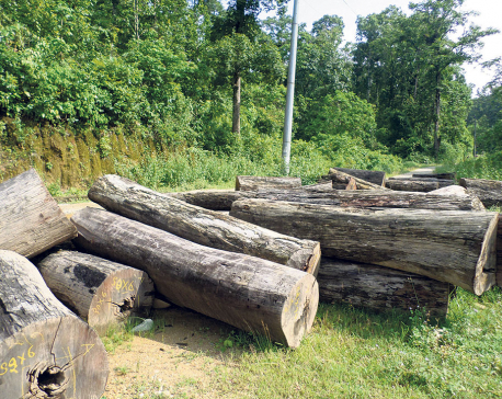 Felling trees for 'scientific management of forest' alarms locals