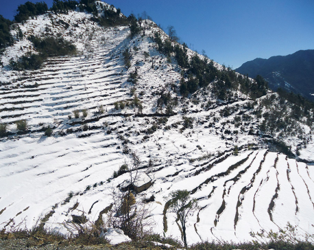 Hill farmers thrilled by snowfall, rain