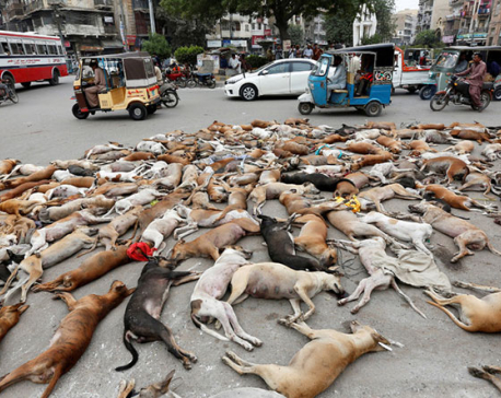 Hundreds of stray dogs poisoned in Pakistani city of Karachi