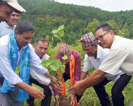 Tree plantation for safety of public land