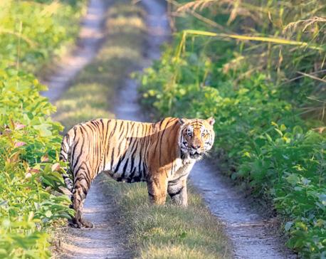 Act to save wildlife