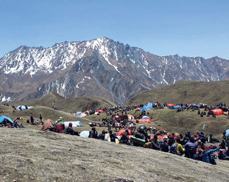 49 arrested for illegally entering Dolpa to pick Yarsagumba