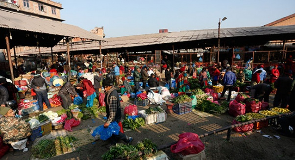 Inedible vegetables found 66 times in Kathmandu over past five years (with video)