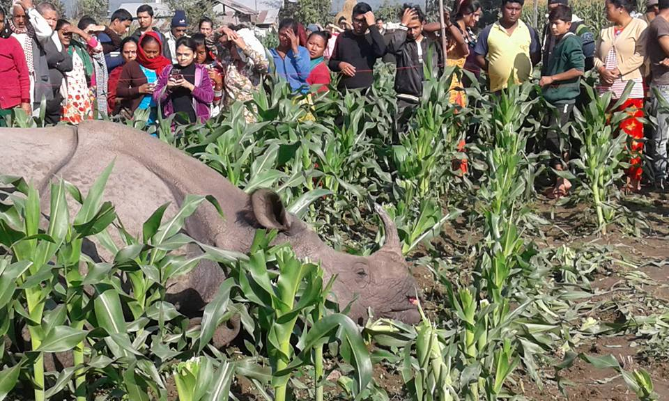 One-horned rhino found dead