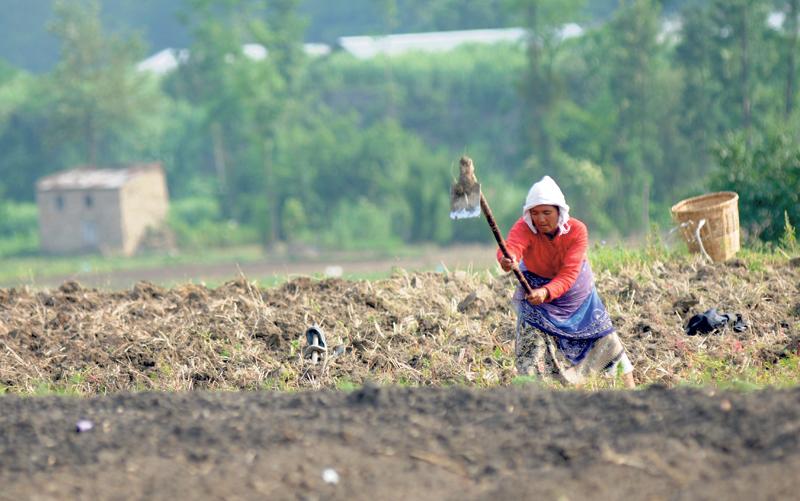 Diy Farming: Harvesting hope
