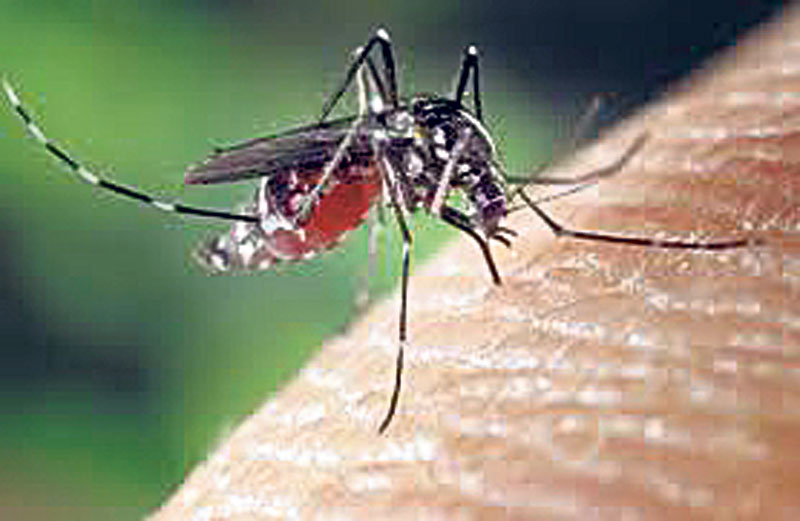 12 dengue cases found in Valley in last six days