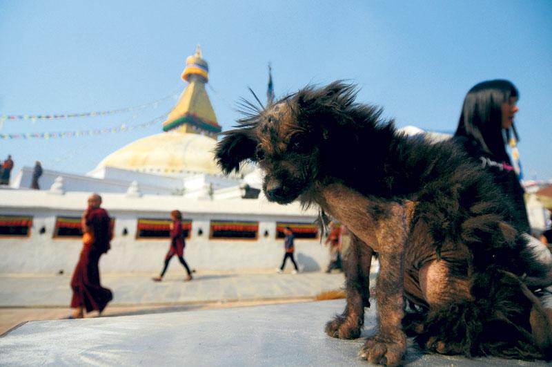 No Dog Tihar for strays