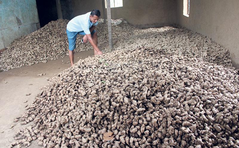 Govt steps up efforts to lift ban on ginger export