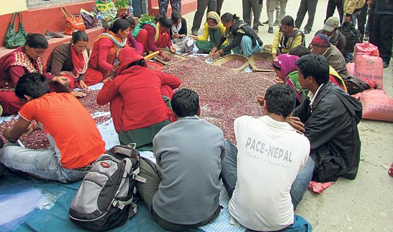 NFC starts buying beans, buckwheat in Karnali