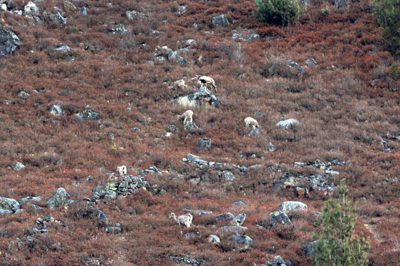 Rampant poaching in Mugu endangers many species
