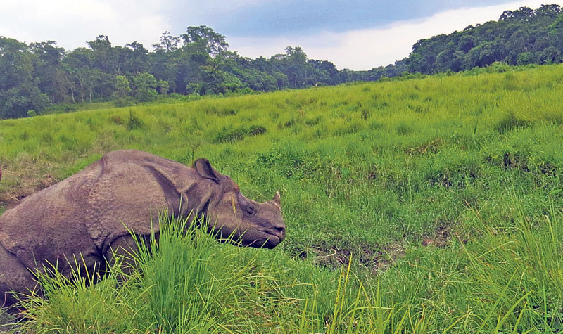 Rhinos becoming target of electric traps