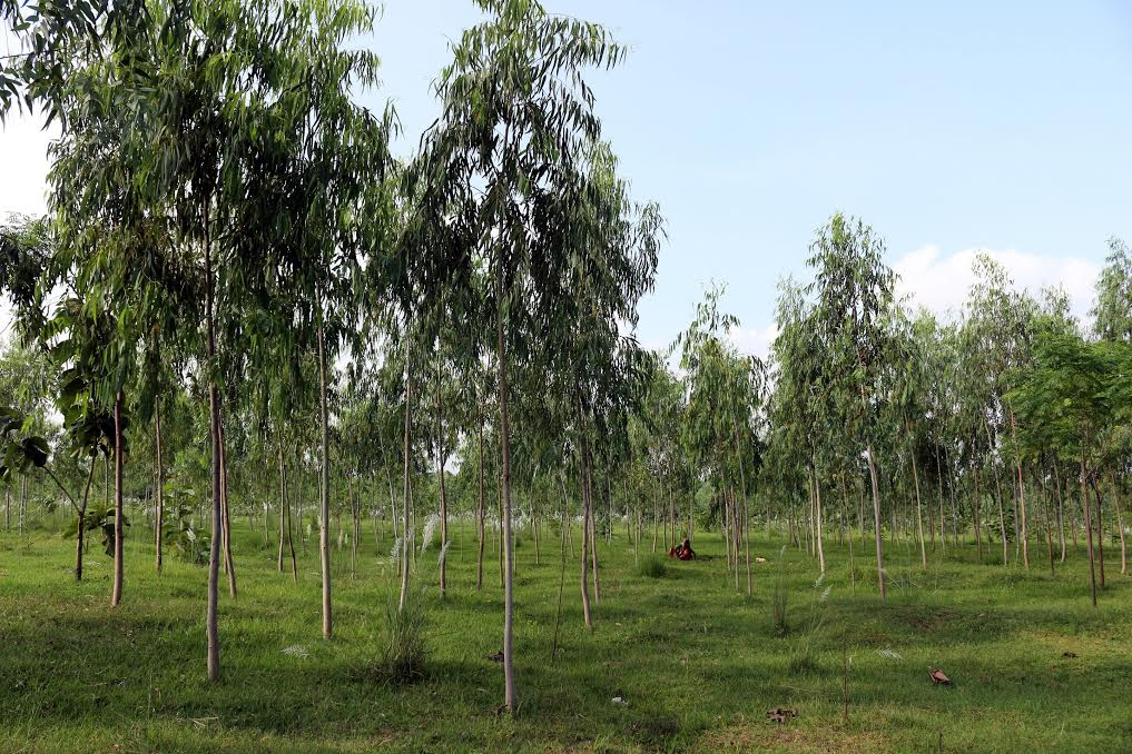 Ncell supports reforestation, conservation activities