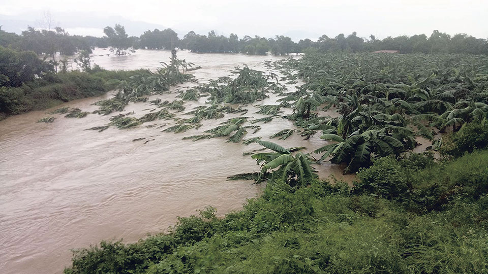 My City - Flood hits fish, poultry and banana farming