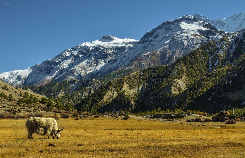 Wanderlust in Annapurna