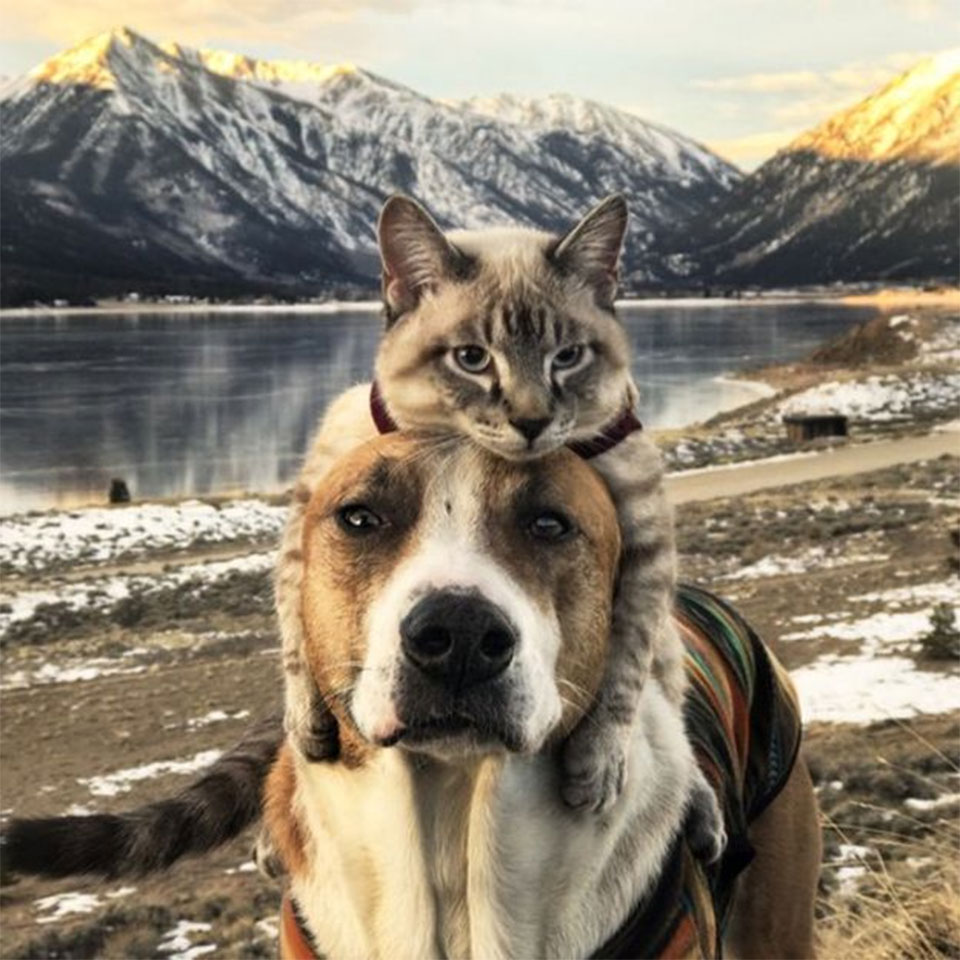 Henry and Baloo: Dog and cat travel companions gain cult following