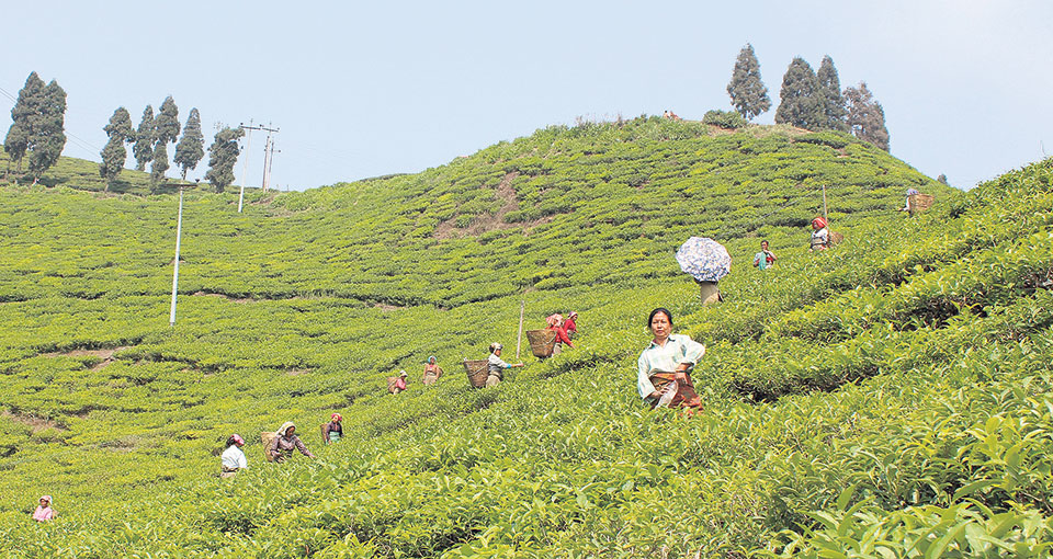 Most workers in tea industry are temporary