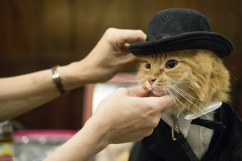 The Algonquin Hotel throws a 'purrty,' feline fashion show