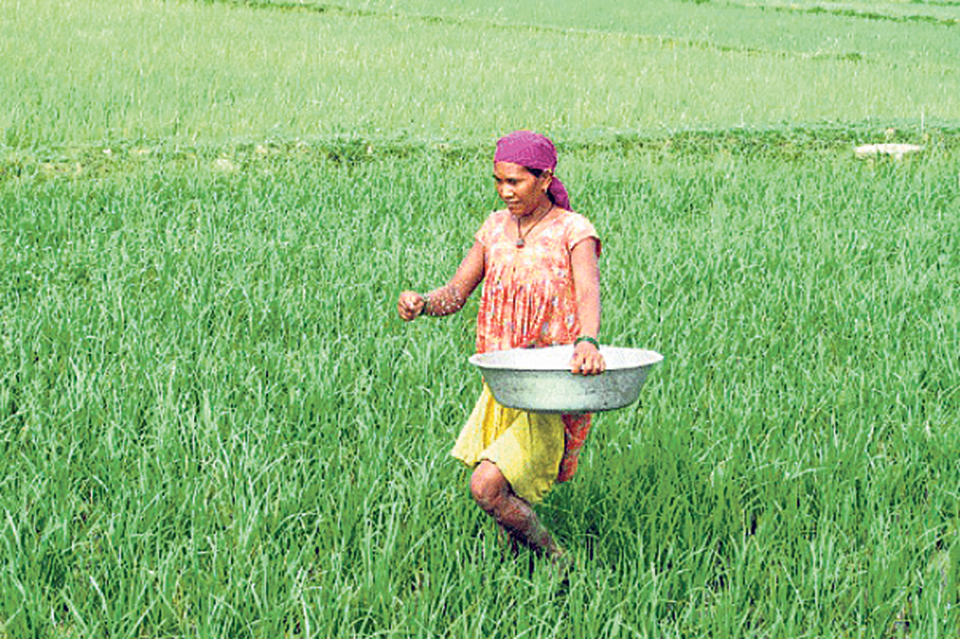Farmers continue to reel under shortage of chemical fertilizers