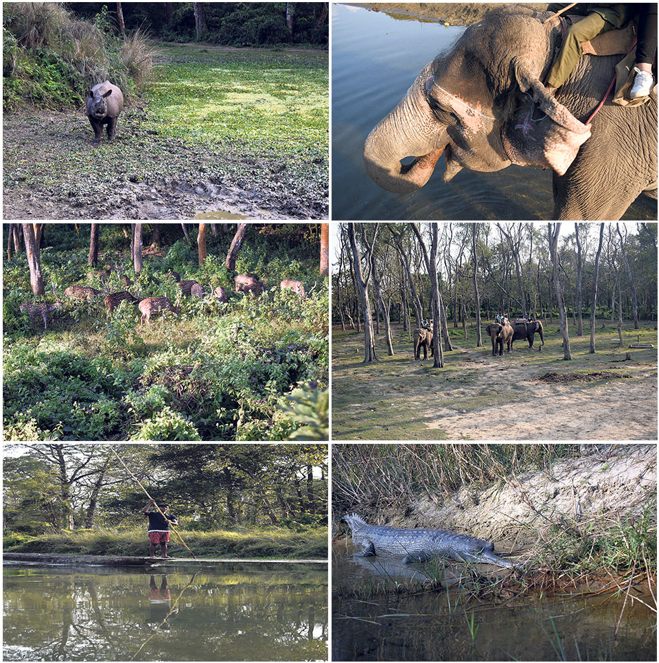 Chitwan: The Heart of the Jungle