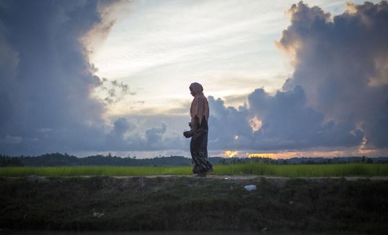 Bamboo-boring beetles wreak havoc in Rohingya refugee camps