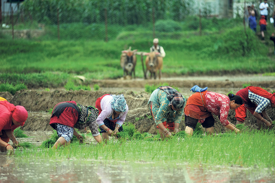 Agriculture ministry projects 8.39% growth in paddy production