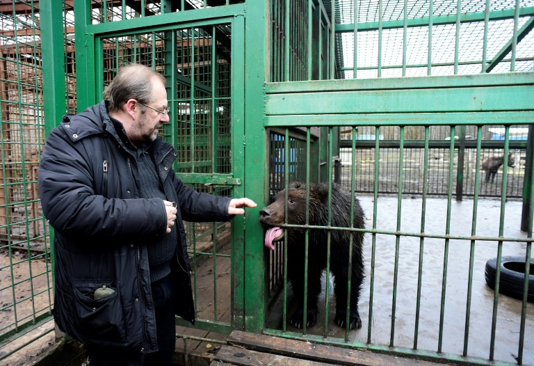Runaway lion, wounded elk find home in Russian shelter