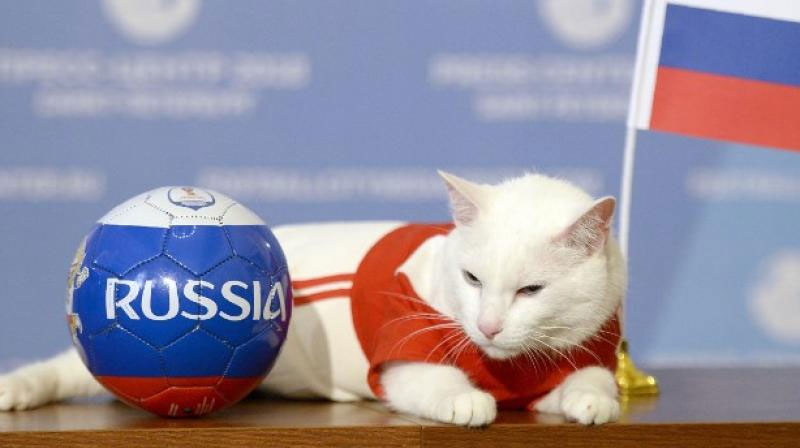FIFA World Cup 2018: Russia to win first match, predicts Achilles the 'psychic' cat