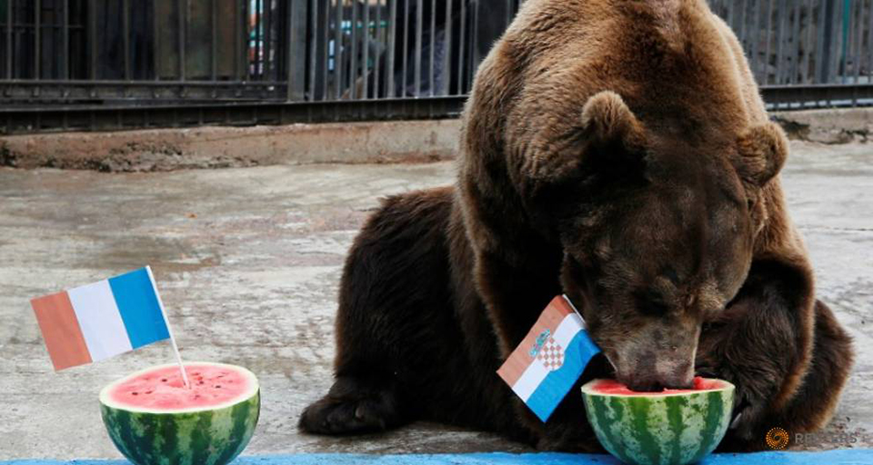 Buyan the bear predicts Croatia will beat France in World Cup final