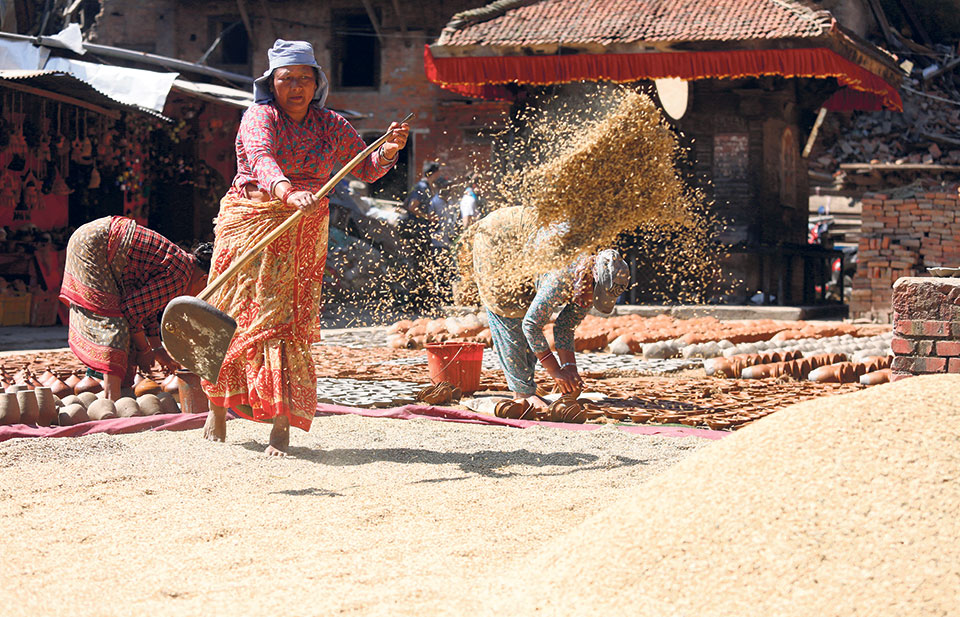 Agriculture ministry fixes minimum support price for paddy